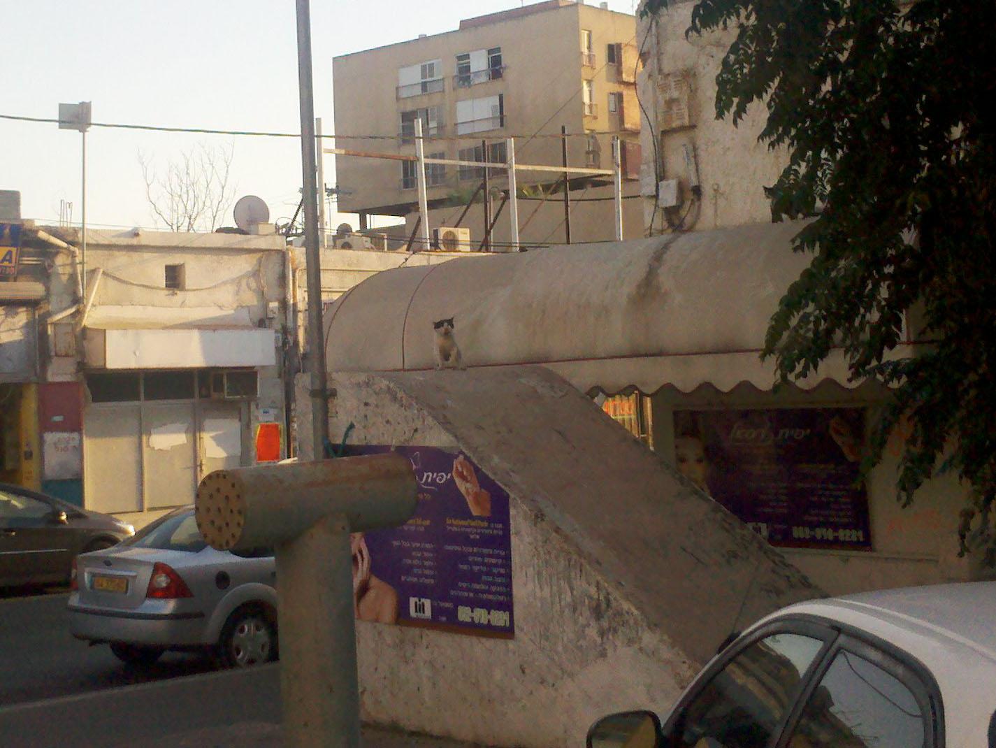 Cat3_Ashkelon.jpg