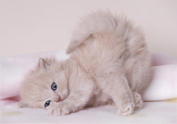 kittens-015.jpg