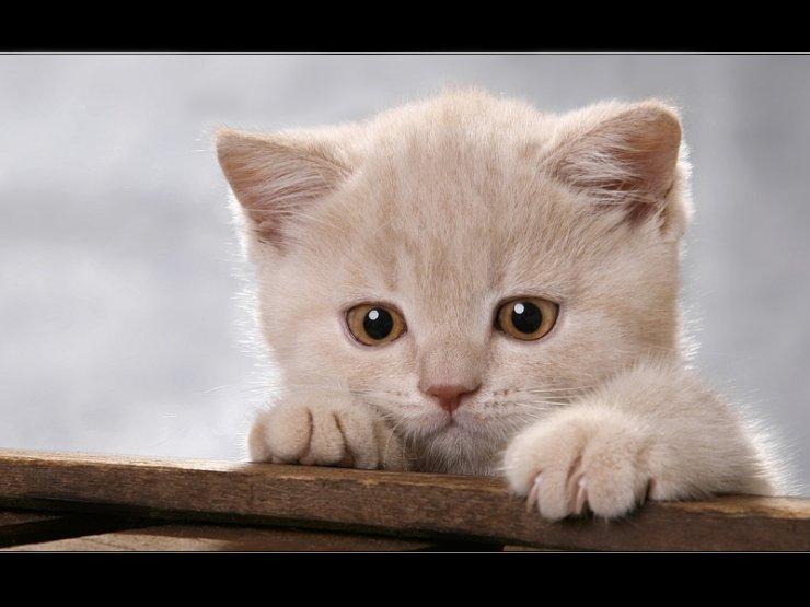 kittens-011.jpg
