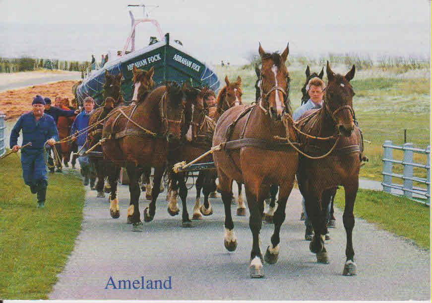 Ameland 1.jpg