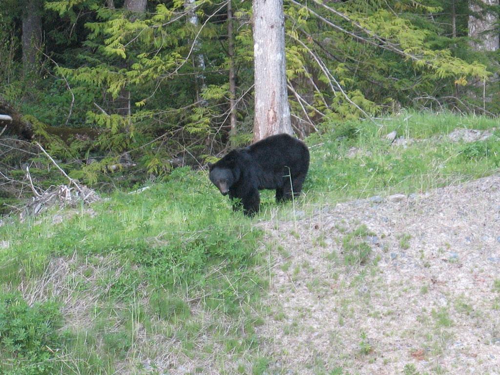 seymour_bear_2009-05-22_6426a.jpg
