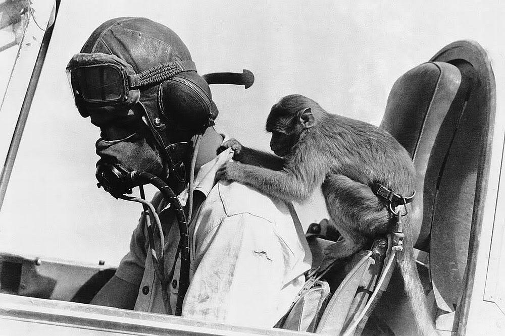 Brit pilot and mascot, North Africa.jpg
